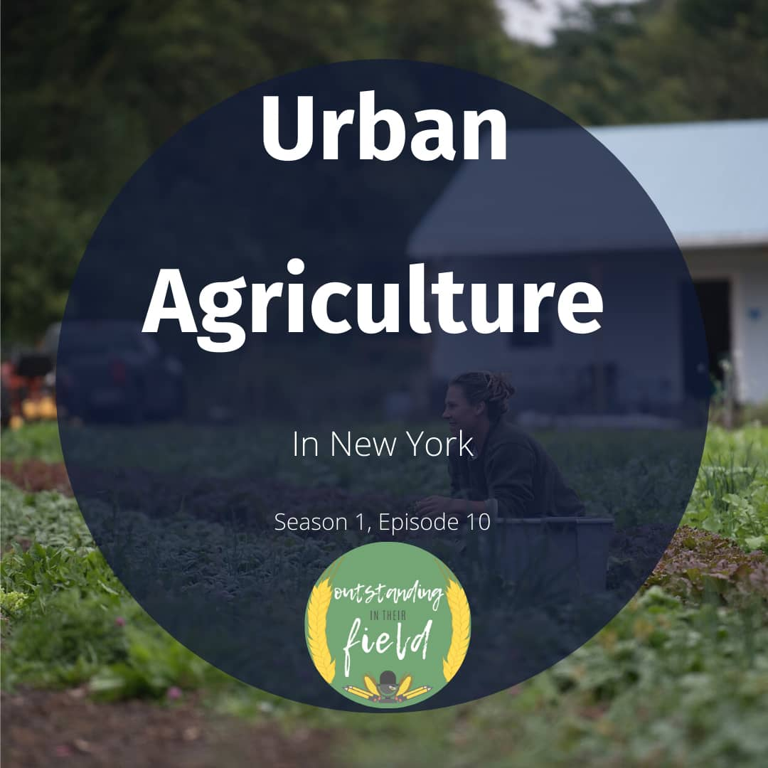 Urban Agriculture in New York