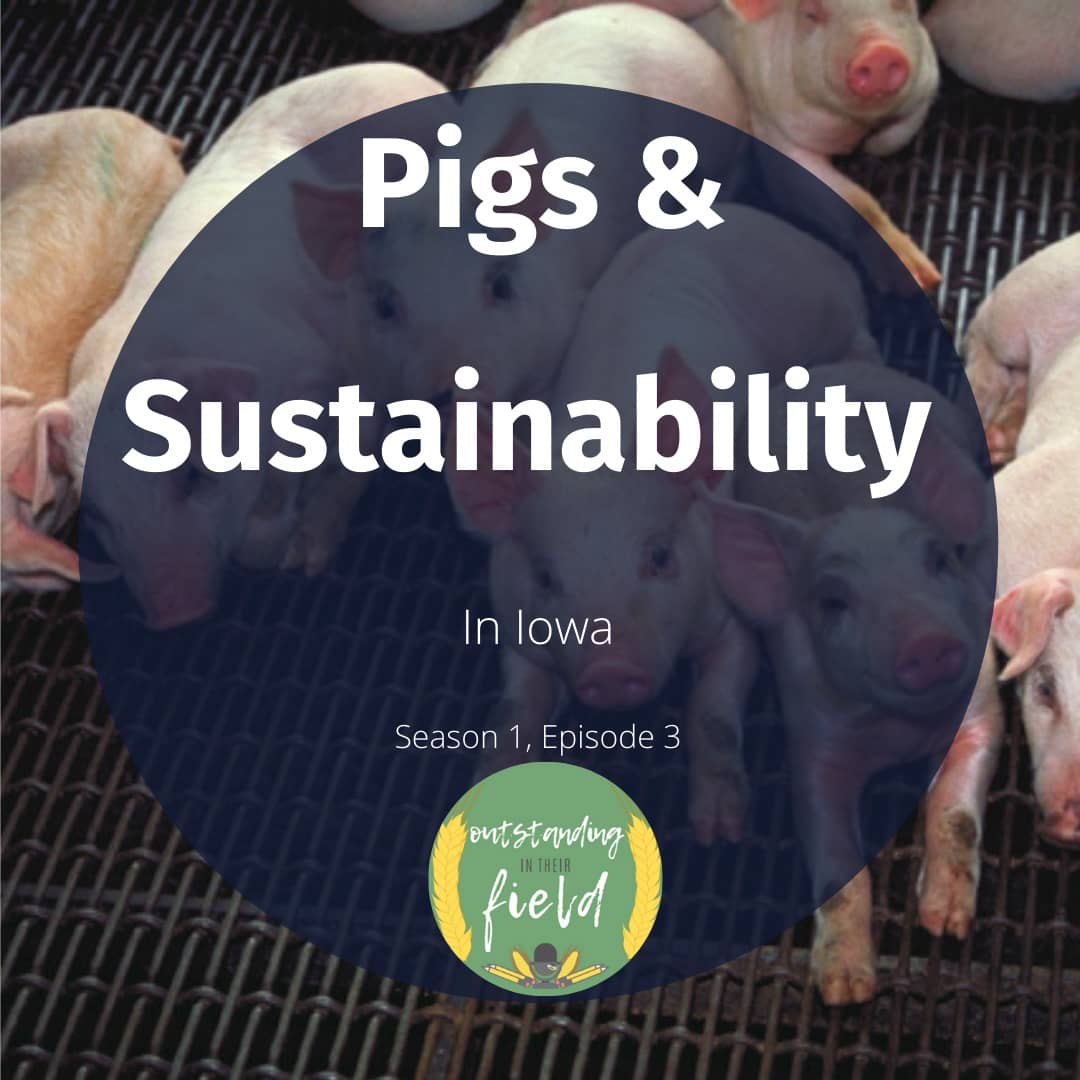 Pigs and Sustainability in Iowa