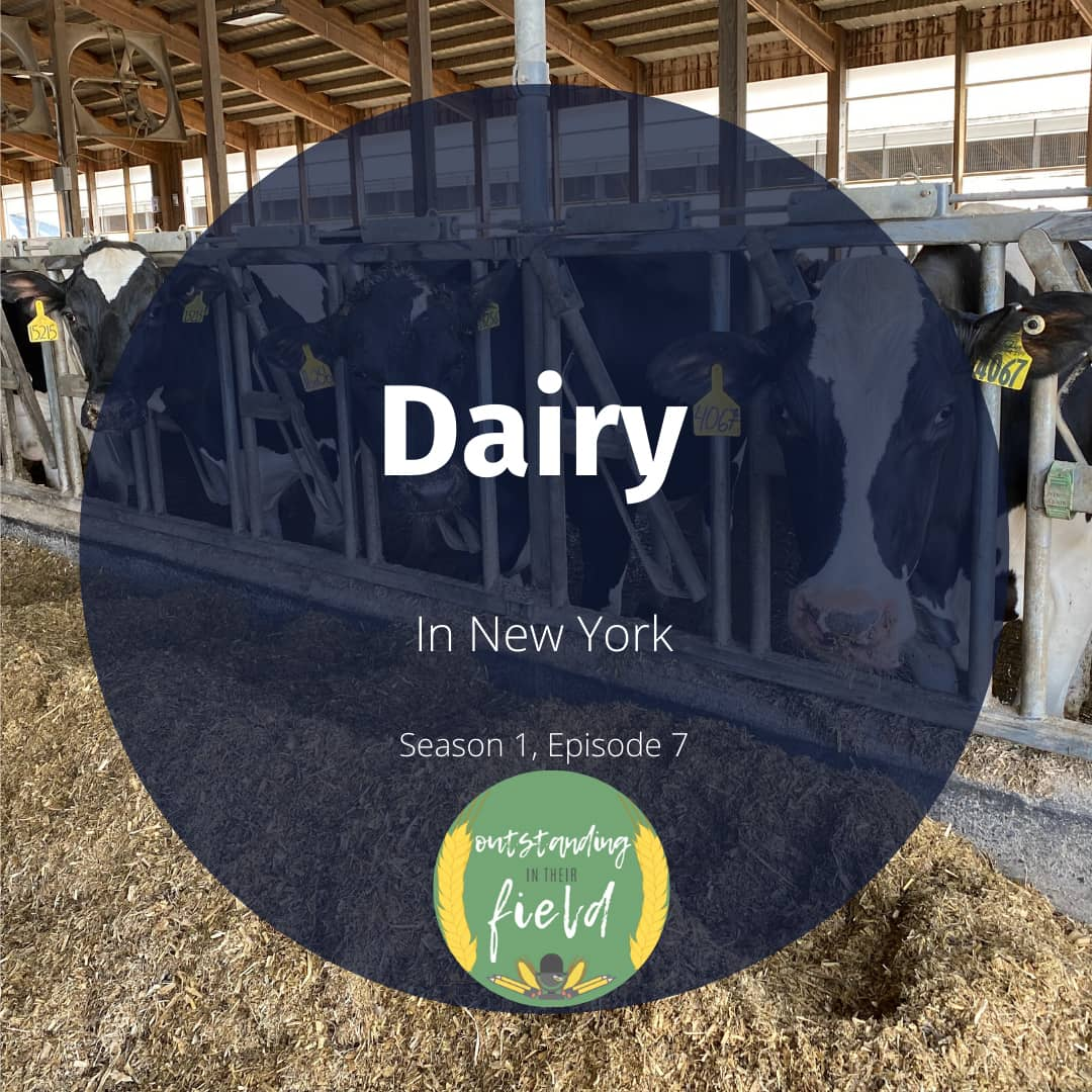 Dairy in New York